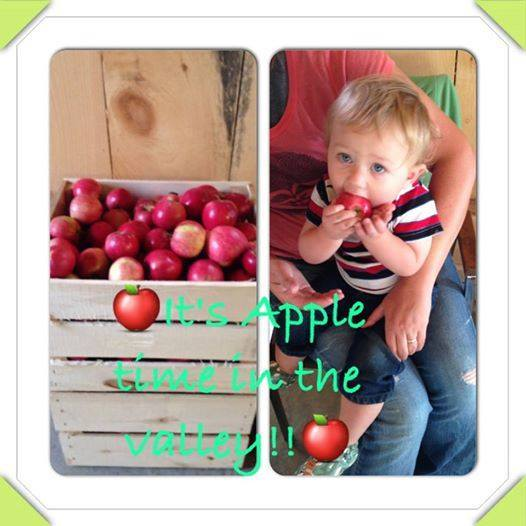 Fresh Ready Picked Apples - Ridge Farm Wisconsin