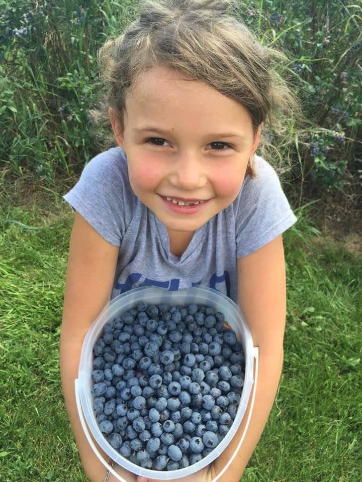 children upick blueberries in eleva wisconsin